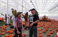 Glow Harvest, Langley, B.C. – Great for Halloween & Fall
