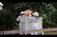 C R Apiary Honey Extraction