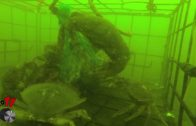Goes To 11 GoPro Cam in a Crab Trap