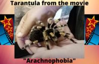 """Tarantula from the movie """"Arachnophobia"""""""