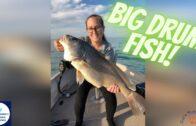 Big Drum Fish