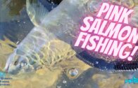 Fishing For Pink Salmon on Campbell River
